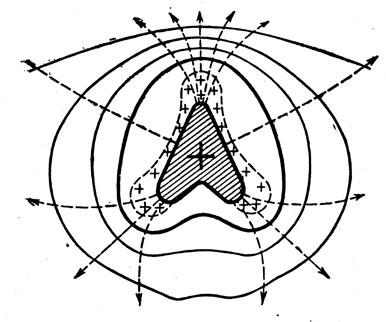 Рис. 64. Линии напряженности и сечение эквипотенциальных поверхностей